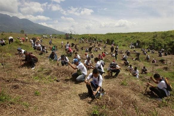 Plant trees to help mitigate global warming.