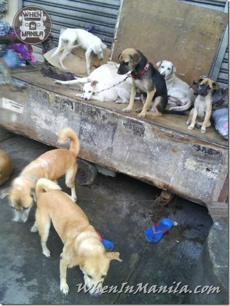Mang-Rudy-Project-animal-Lover-Homeless-Man-Adopts-Dogs-Stray-Cats-WhenInManila-Manila-Philippines-7