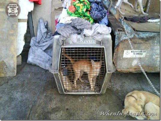 Mang-Rudy-Project-animal-Lover-Homeless-Man-Adopts-Dogs-Stray-Cats-WhenInManila-Manila-Philippines-9