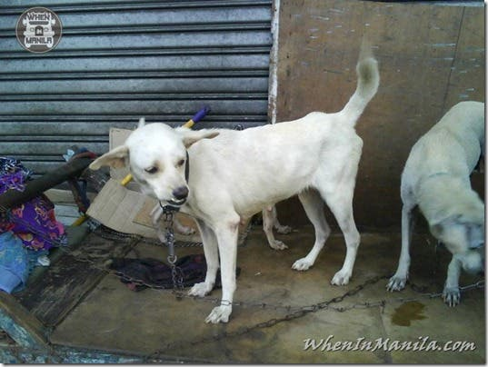 Mang-Rudy-Project-animal-Lover-Homeless-Man-Adopts-Dogs-Stray-Cats-WhenInManila-Manila-Philippines-11