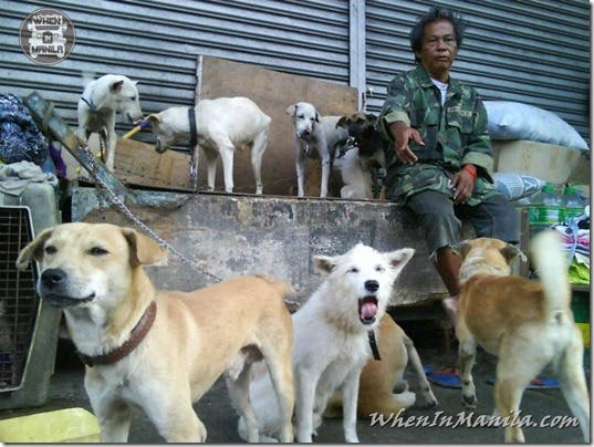 Mang-Rudy-Project-animal-Lover-Homeless-Man-Adopts-Dogs-Stray-Cats-WhenInManila-Manila-Philippines-14