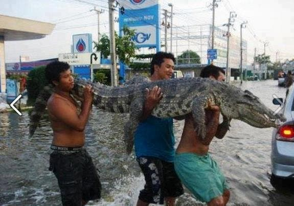 pets-flood-save-animals-wheninmanila1 - First things first - Philippine Photo Gallery