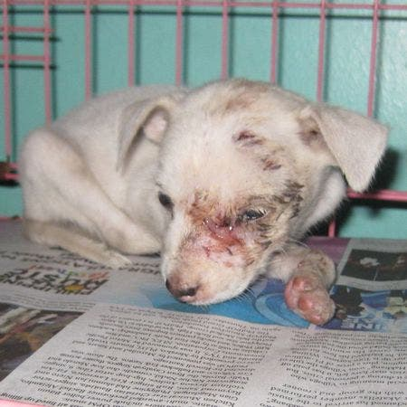Story of Rafiq - Dog Rescue Story by Compassion and Responsibility for Animals (CARA)