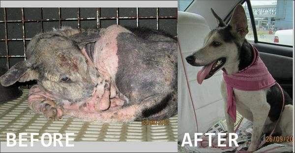 Story of Zorro - Dog Rescue Story by Philippine Animal Lovers Society (PALS)
