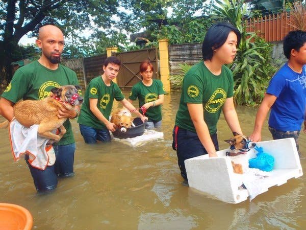 Dog Rescue Stories from the Philippine Animal Welfare Society (PAWS)