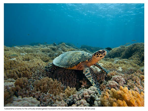 by Tet Lara (Hawksbill Turtle and critically-endangered)