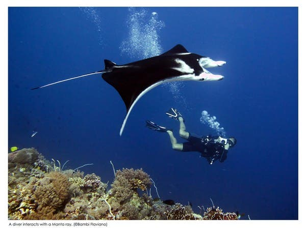by Bambi Flaviano (a friendly Manta ray striked a pose at the count of three!)