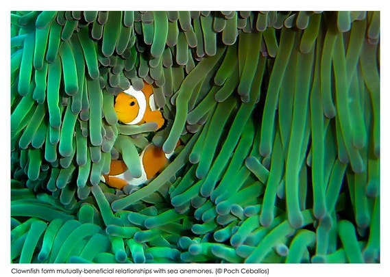 "by Poch Ceballos (Say ""Hi"" to Nemo... Although this one's for real)"