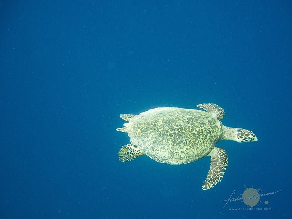 We were THIS CLOSE to the green sea turtle!
