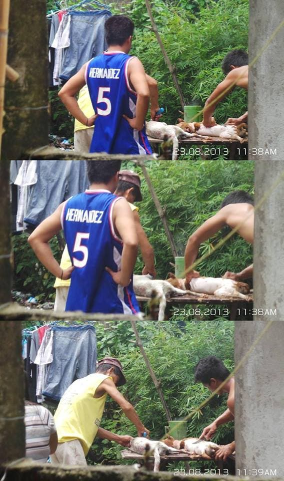 Dog Meat Traders - Dog Butchers - Philippines - Animal Welfare