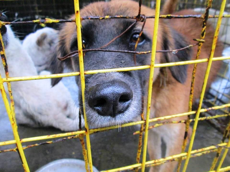 Help Cavite Dog Shelter - SAWS - PAWS - Philippine Animal Welfare Society