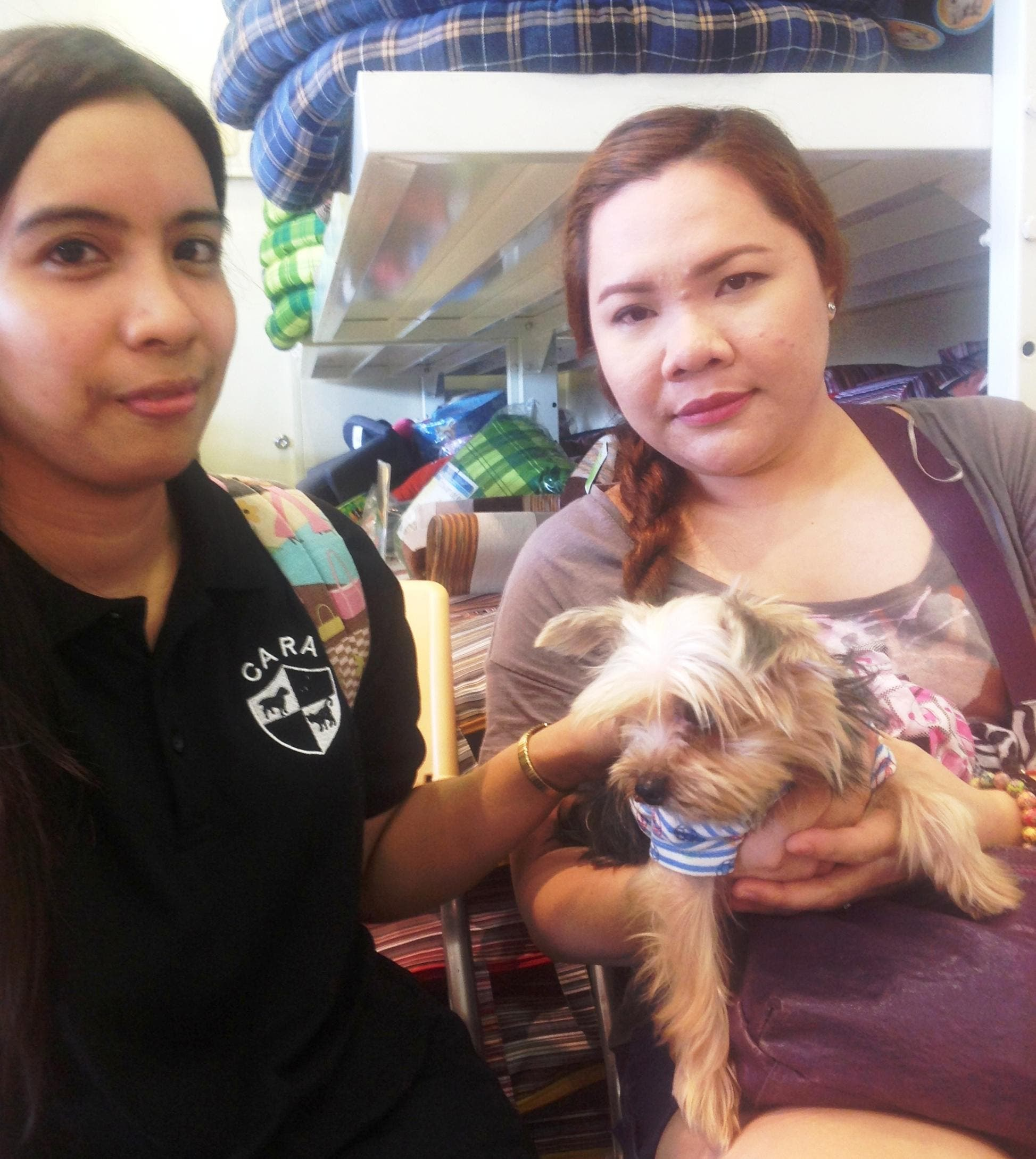 Animal Rescue and Welfare in the Philippines - Rescued dog