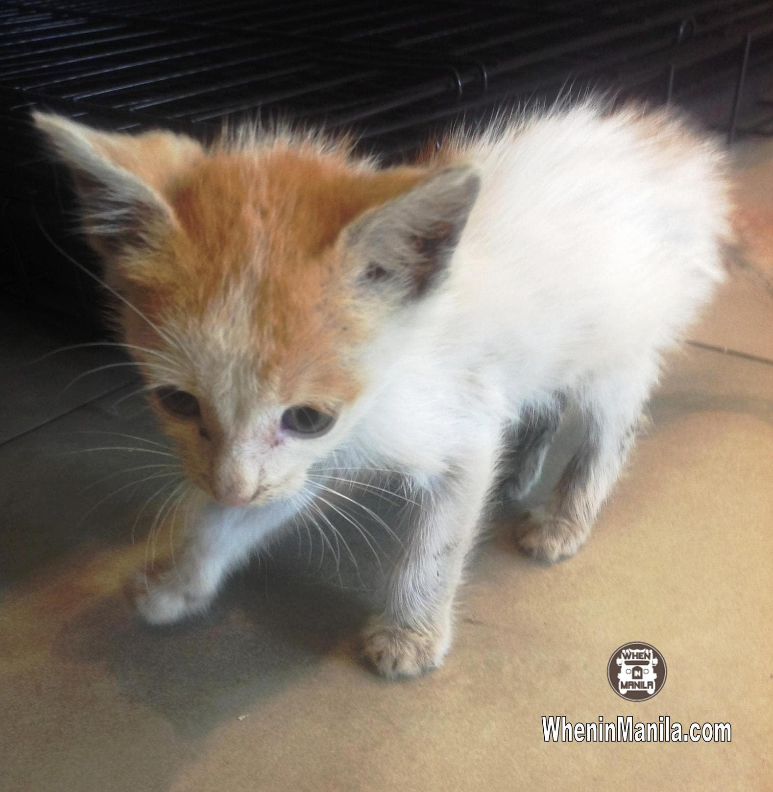 Animal Rescue and Welfare in the Philippines - Dado