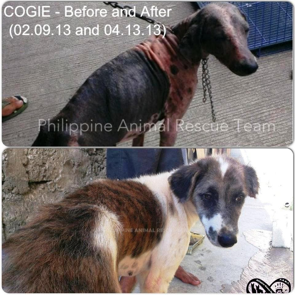 Philippine Animal Rescue Team - Cogie - Animal Rescue Group - #FiftyPesosFriday Pledge