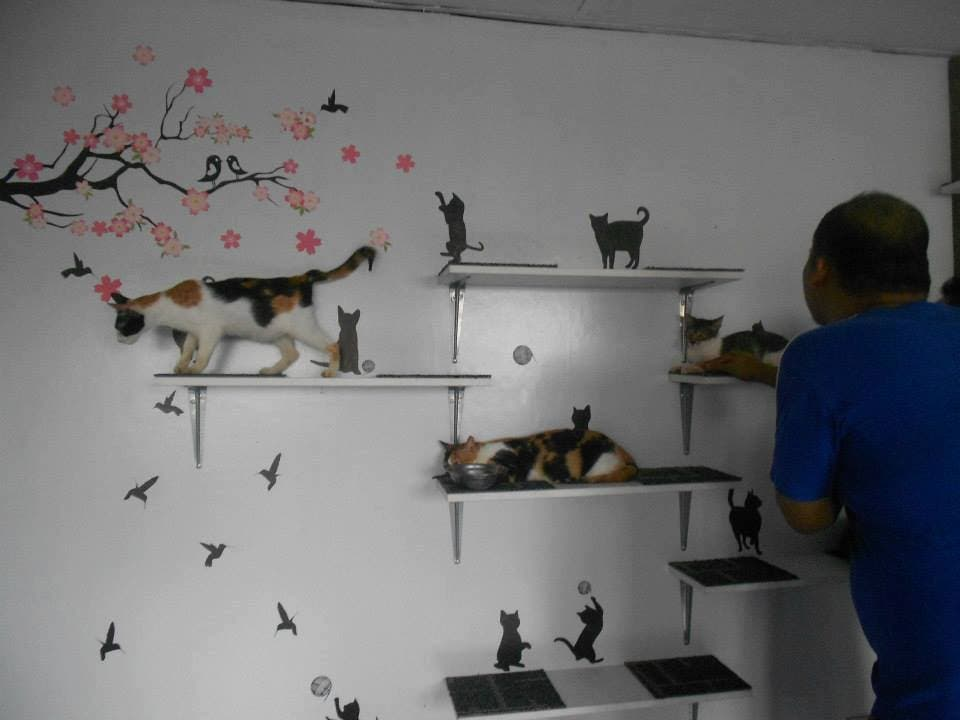 Philippine Animal Rescue Team - Cattery