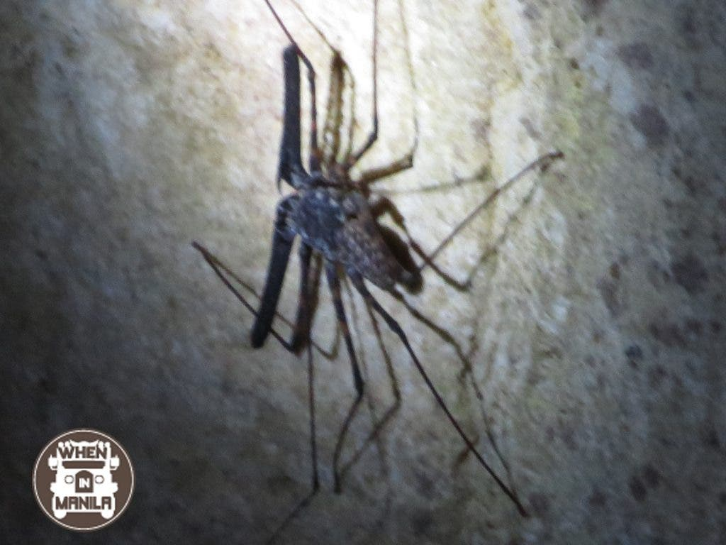 Spider-scorpions like these can be found in the dark crevices of the cave