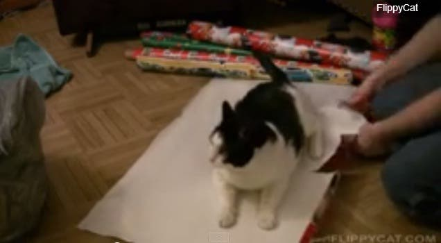 How to Gift Wrap A Cat for Xmas Kitty Wrapping for Christmas WhenInManila