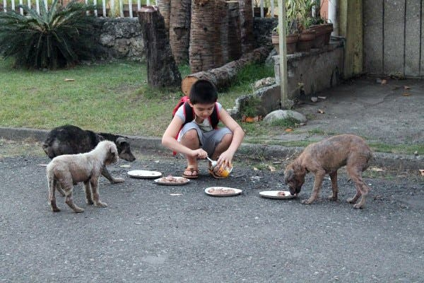 Happy Animals Club 9 Year Old Boy Creates Animal Shelter Project to Help Stray Dogs and Cats in the Philippines (12)