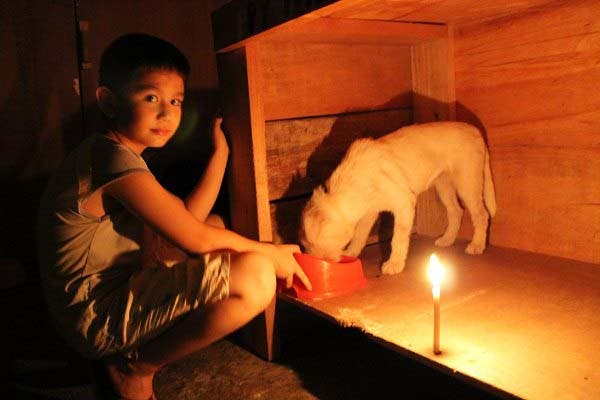 Happy Animals Club 9 Year Old Boy Creates Animal Shelter Project to Help Stray Dogs and Cats in the Philippines (14)