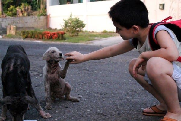 Happy Animals Club 9 Year Old Boy Creates Animal Shelter Project to Help Stray Dogs and Cats in the Philippines (2)