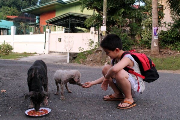 Happy Animals Club 9 Year Old Boy Creates Animal Shelter Project to Help Stray Dogs and Cats in the Philippines (3)