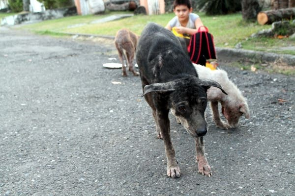 Happy Animals Club 9 Year Old Boy Creates Animal Shelter Project to Help Stray Dogs and Cats in the Philippines (5)