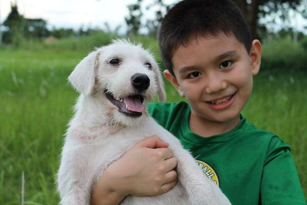 Happy Animals Club 9 Year Old Boy Creates Animal Shelter Project to Help Stray Dogs and Cats in the Philippines (6)
