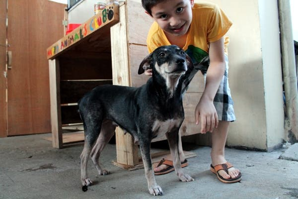 Happy Animals Club 9 Year Old Boy Creates Animal Shelter Project to Help Stray Dogs and Cats in the Philippines (8)