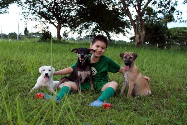 Happy Animals Club 9 Year Old Boy Creates Animal Shelter Project to Help Stray Dogs and Cats in the Philippines (9)