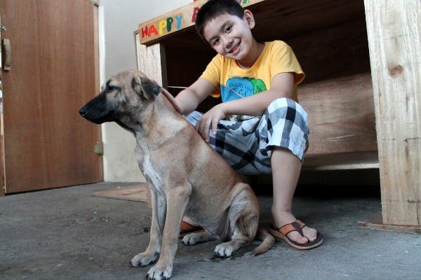 Happy Animals Club 9 Year Old Boy Creates Animal Shelter Project to Help Stray Dogs and Cats in the Philippines WhenInManila 2