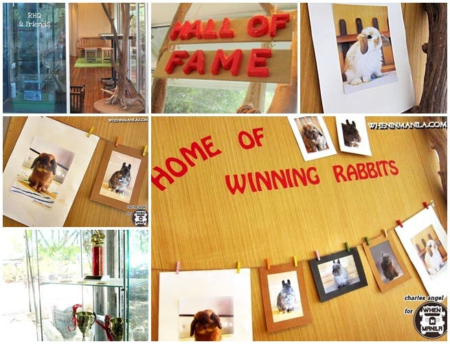 Top5 Reasons Rabbit Headquarters-RHQ-Right Place-Bunny Singapore-wheninmanila-rabbits-CharlesAngel20