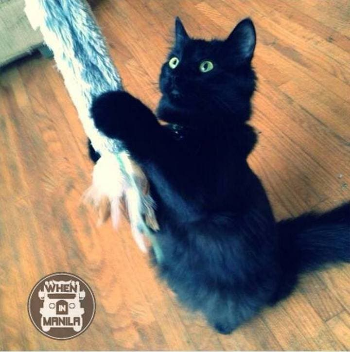10 Reasons Why Cats are Great Pets