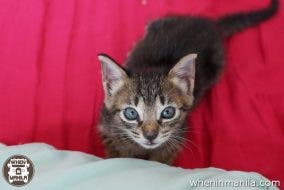 five-things-to-consider-adopting-cat-frank-schuengel-muning-the-streetkitten (2)