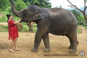 Adopt an Elephant for a Day Chiang Mai, Thailand