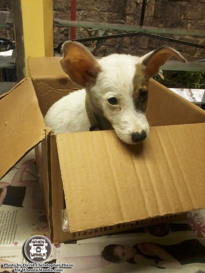 Why You Should Consider Opening Your Home To Stray Dogs
