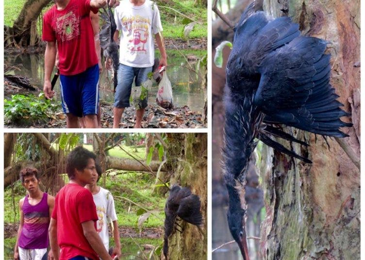 Alumni Protests Wildlife Hunting in UP Diliman