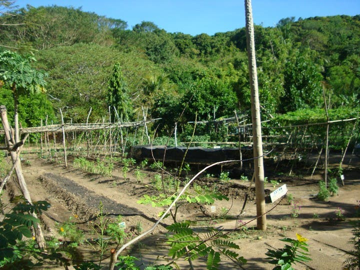 How This Group is Saving Mother Nature in Palawan (7)