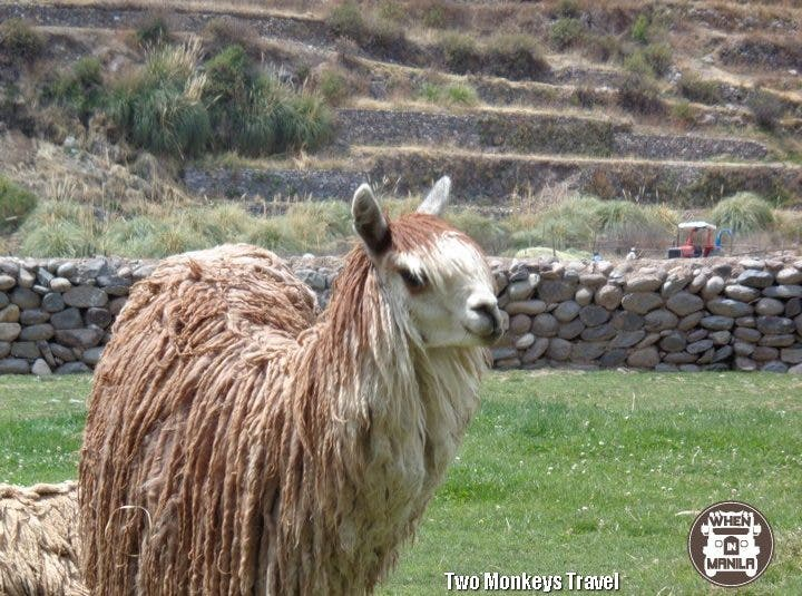 13 Things must do when visit Peru