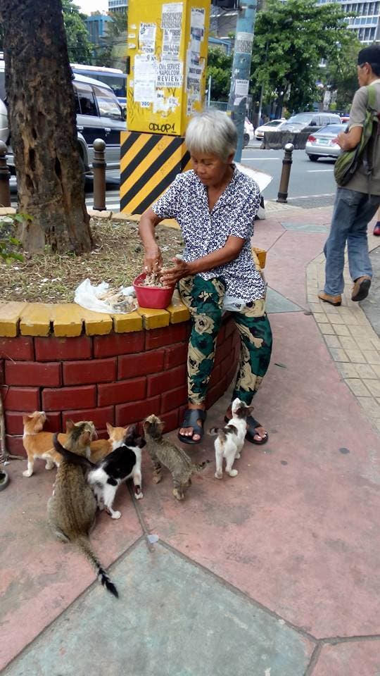 Selfless Woman Feeds Puspins