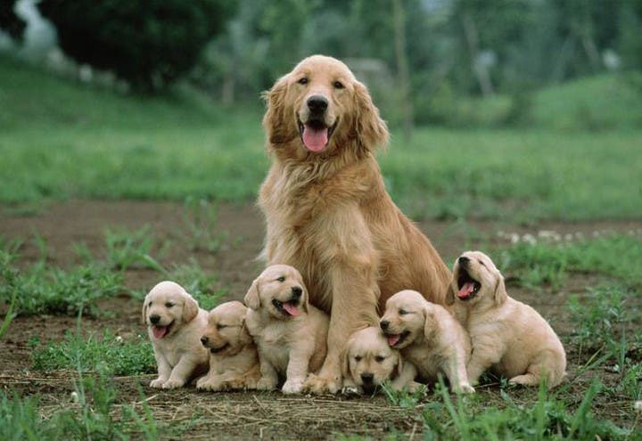 Meet the Dogs With Their Mini-Me's 15