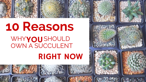 10 Reasons Why You Should Own a Succulent Right Now - When