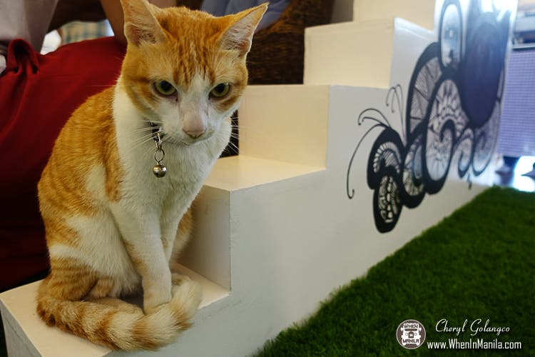 The-Cat-House-Cafe-02