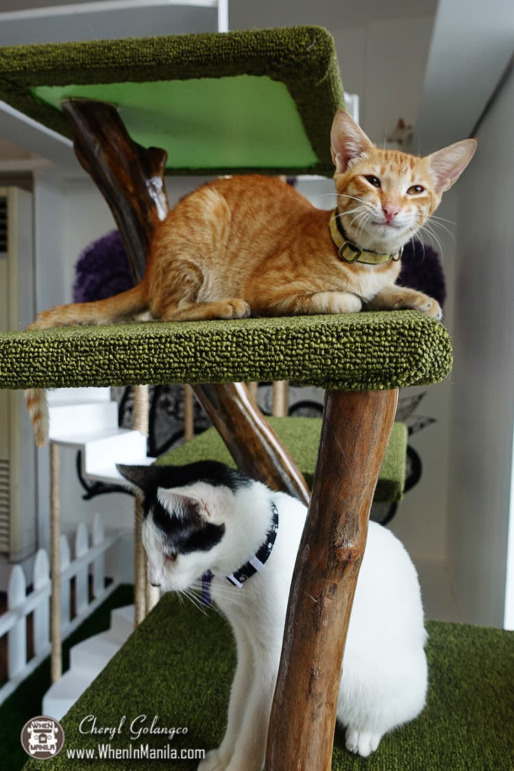The-Cat-House-Cafe-23