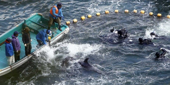 Filipinos Join Japanese People in Condemning Taiji Dolphin Slaughter