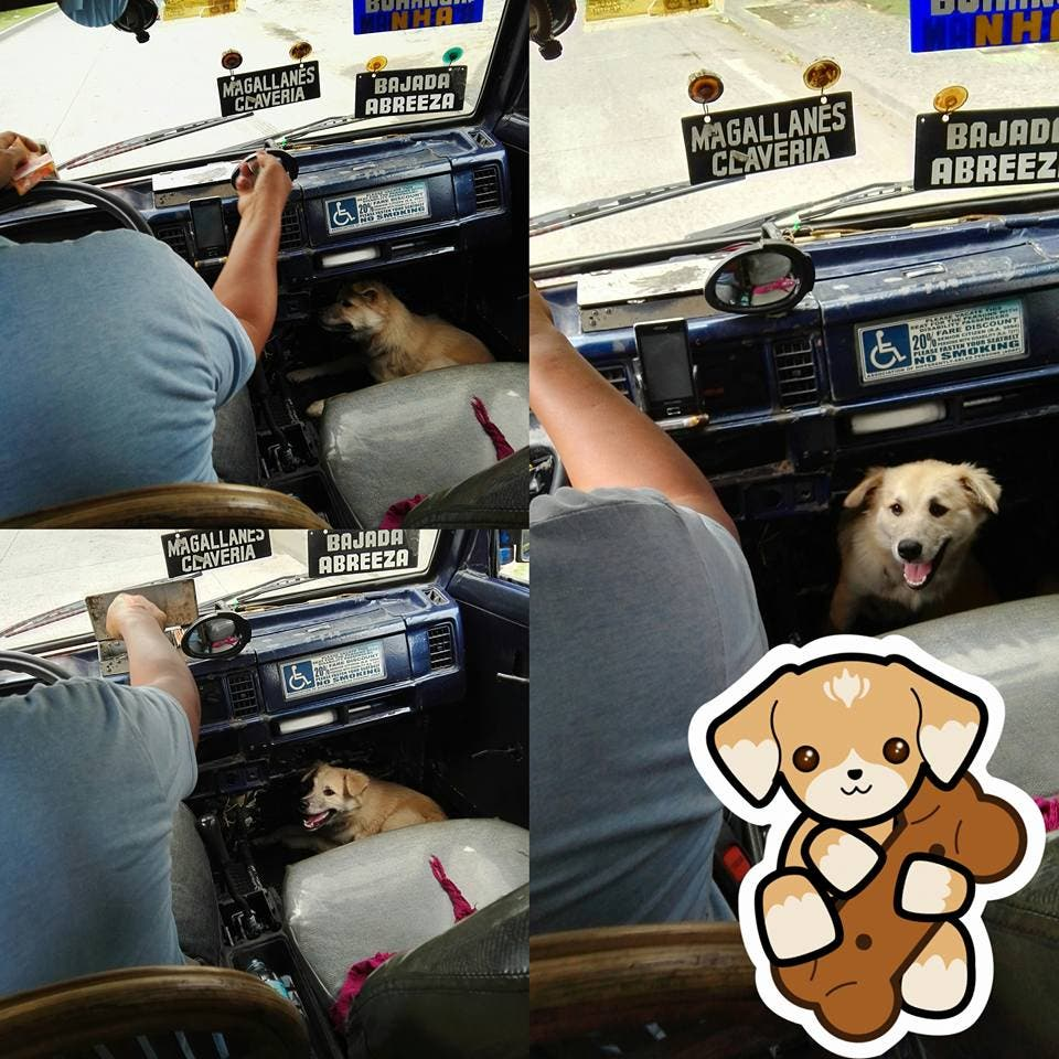 LOOK Multicab Driver Sacrifies One Seat so His Dog Could Join Him