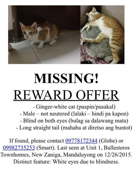 Help This Netizen Find Her Missing Cat