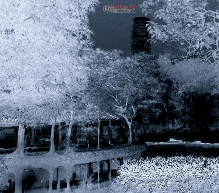 Rattus - Infrared Photography (2)