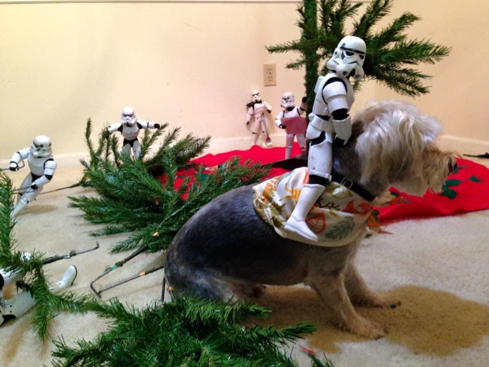 Storm-Troopers-Set-Up-Christmas-Tree-15