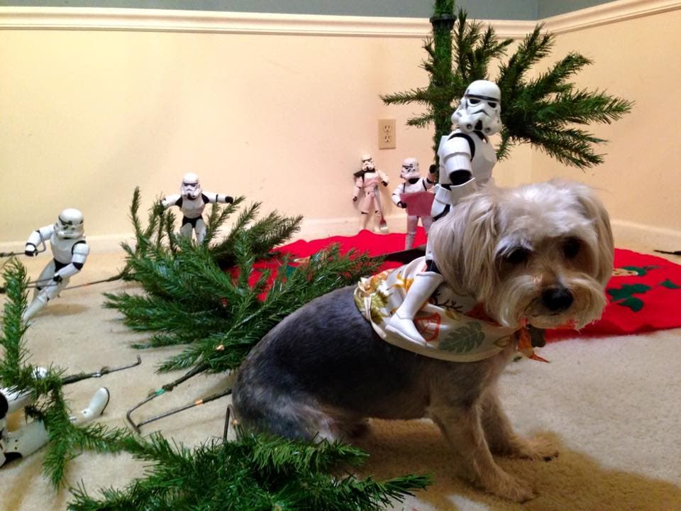 Storm-Troopers-Set-Up-Christmas-Tree-17