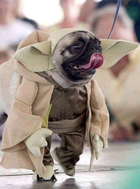 star-wars-dog-edition2